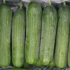 Mini komkommer zaden