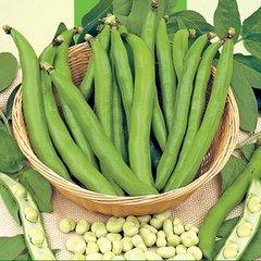 Tuinbonen zaden