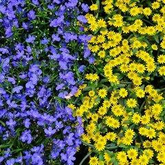 Bloemzaden op kleur
