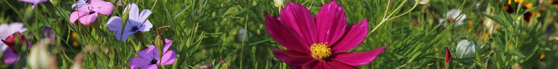 Wilde-bloemen-zaden