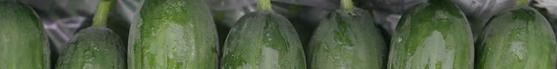 Mini-komkommer-zaden