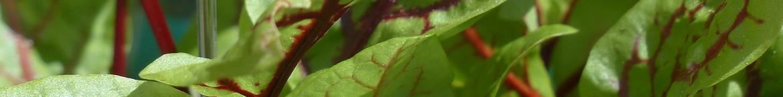 Zuring-zaden