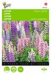 Lupinus Russell's Hybriden (gemengd) zaden