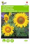 Zonnebloem Sunspot enkelbloemige Laag Geel zaden