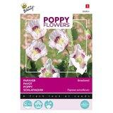 Papaver Blauwmaanzaad somniferum Poppy Flowers roze zaden