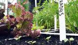 plantenlabels-20-stuks-met-stift