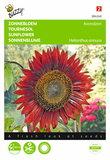 Zonnebloem Avondzon bruin/rood zaden