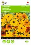 zonnehoed Gloriosa Daisy (Rudbeckia) - voorkant