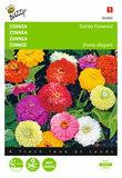 Zinnia Dahliabloemig gemengd - voorkant