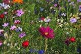 Wilde bloemen kweken