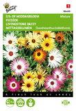 IJsbloem kleurenmengsel Dorotheanthus zaden - voorkant