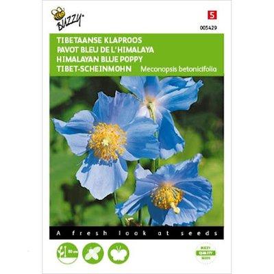 Tibetaanse Klaproos Meconopsis Tibetaanse blauw zaden
