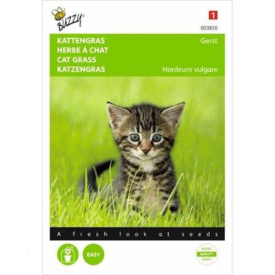 Kattengras Gerst Hordeum vulgare zaden