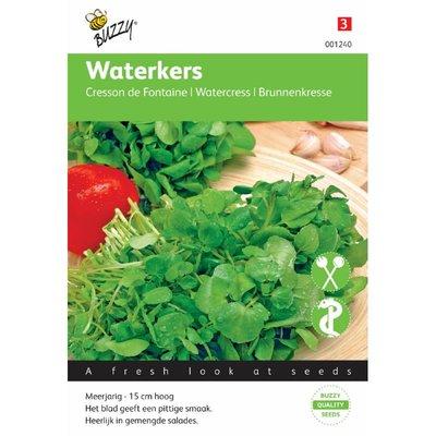 Echte Waterkers (witte)