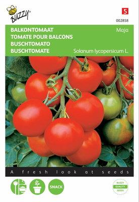 Tomaten Maja (Balkontomaat)