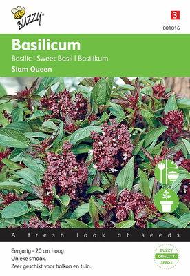 Thaise Basilicum (Siam Queen)