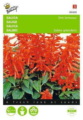 Salvia St. Jansvuur (rood)