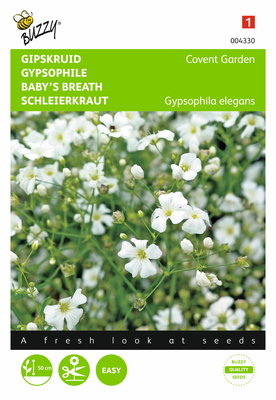 Gipskruid Covent Garden (Gypsophila)