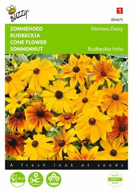 Zonnehoed Gloriosa Daisy (Rudbeckia)