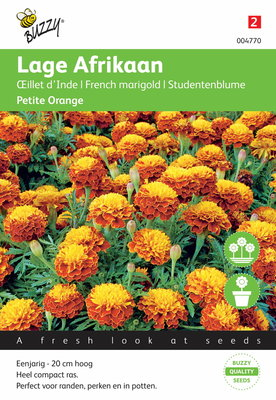 Lage Afrikaan Petite Orange