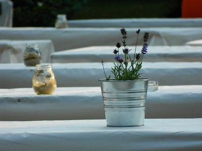 Lavendel kweken in pot