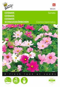 Cosmos Sonata (gemengd) zaden