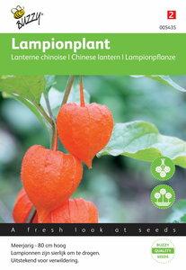 Lampionplant franchetti gigantea zaden