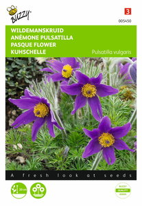 Wildemanskruid anemone zaden
