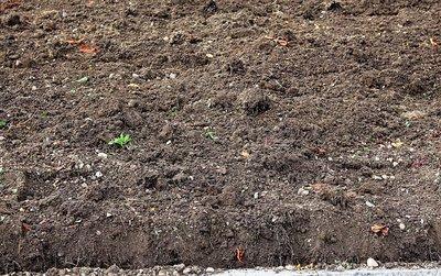 humus grond