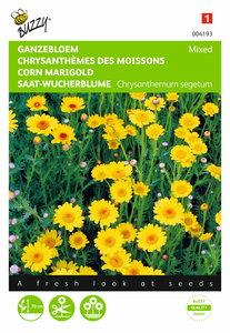 Ganzebloem gele tinten gemengd (Chrysanthemum) - voorkant