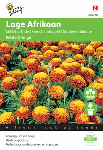 Lage Afrikaan Petite Orange zaden - voorkant