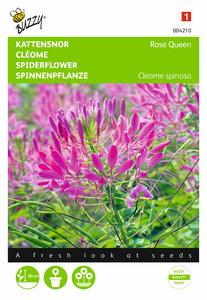 Kattensnor Rose Queen Cleome zaden - voorkant