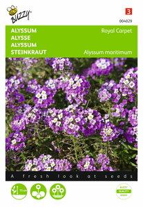 Alyssum Royal Carpet zaden - voorkant
