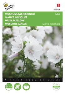 Muskuskaasjeskruid Alba wit Malva - voorkant