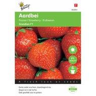 Aardbeien Sarian F1 Hybride zaden